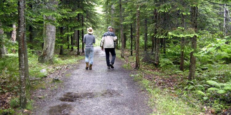 Bangor City Forest Hiking